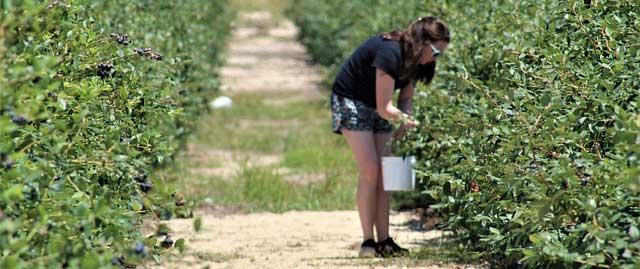 Secteur agricole : comment accueillir les travailleurs saisonniers en période de covid-19 ?